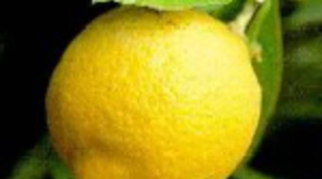 5533-limonexx.jpg