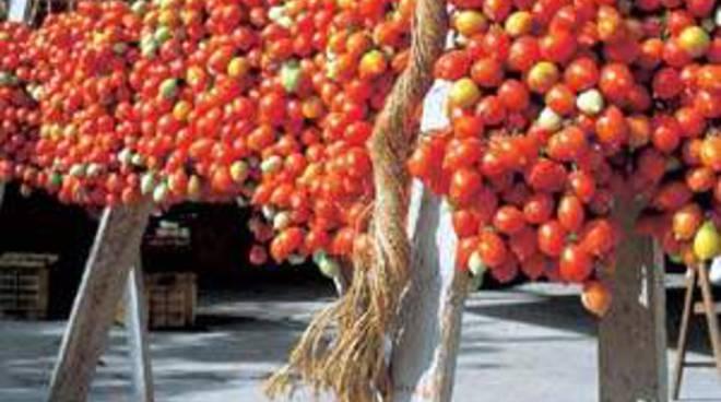 Conserve di pomodoro fuorilegge, sequestrate 7 tonnellate a