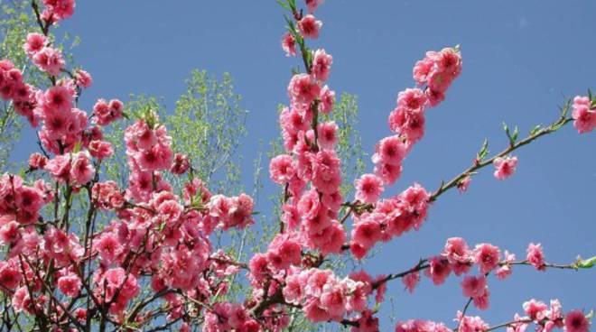 foto-primavera-18-512-x-384-7920.jpg