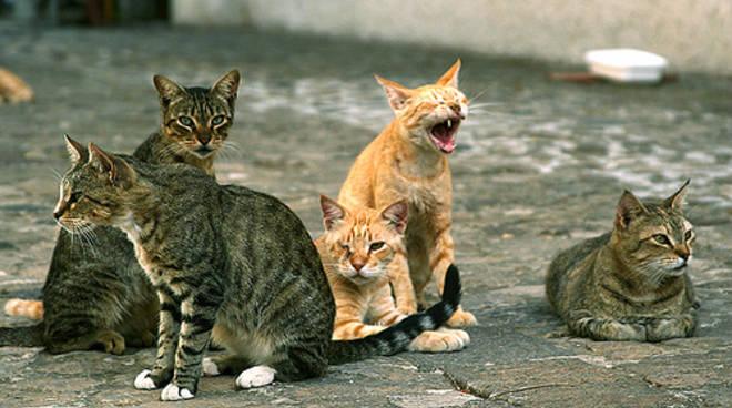 la-lettera-gatti-uccisi-dalle-micidiali-polpettine-avvelenate-occorre-fermare-subito-i-serial-killer.jpg
