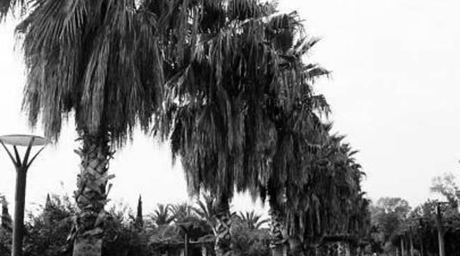 Ufficio Verde Pubblico Salerno : Salerno. insetti killer altre 320 palme dovranno essere abbattute
