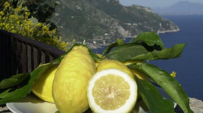 Festa del Limone.jpg