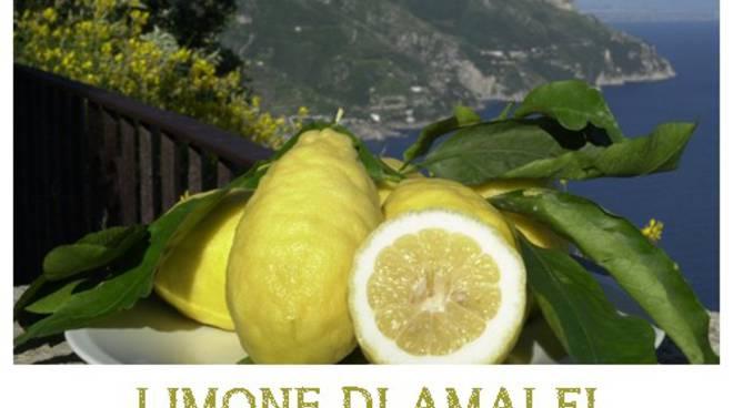Limone Costa D Amalfi Ma Anche A Sorrento Danni Alla Raccolta Per