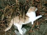 Gatti uccisi