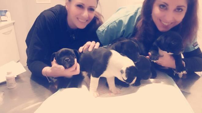Ambulatorio Tasso di Marilena Russo e Adriana Pascale clinica a cinque stelle per cani e gatti