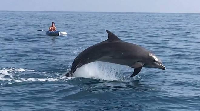 Delfino a Positano