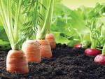 Ortaggi in semina