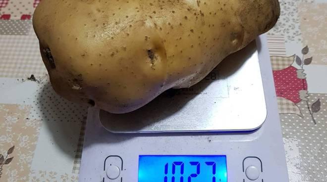 patata bio record tramonti