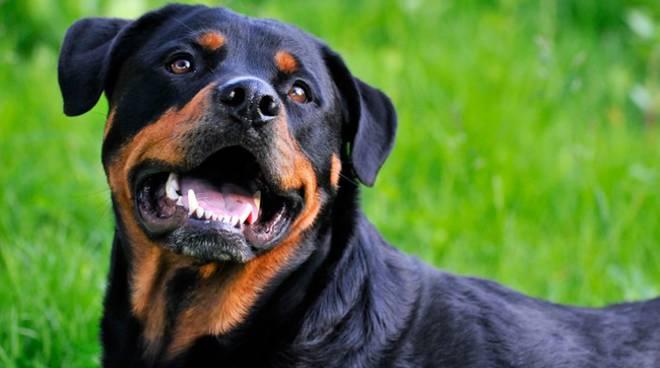 Controlli e sanzioni per i padroni di cani di razza pericolosa