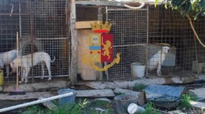 Pozzuoli. Denunciata una 40enne per maltrattamenti su animali