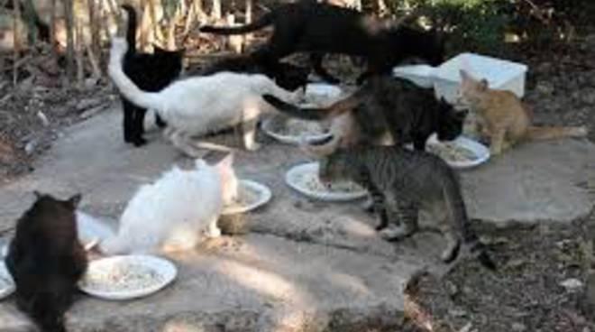 Colonie feline a Positano e in Costiera amalfitana