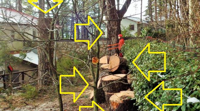 abbattimento alberi a faito