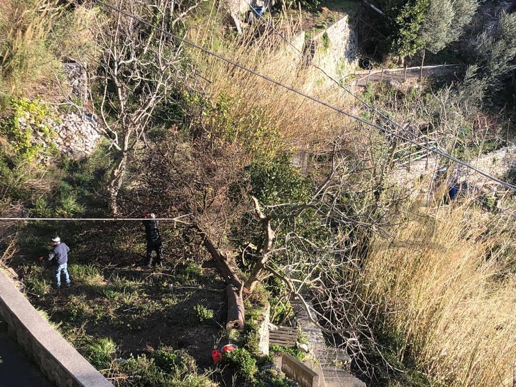 Positano: Intervento della Multiservice dopo la caduta dell'albero