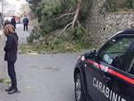 caduto albero a moiano