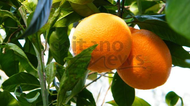Lettere da Piano di Sorrento - Le arance sono belle a via dei Tigli