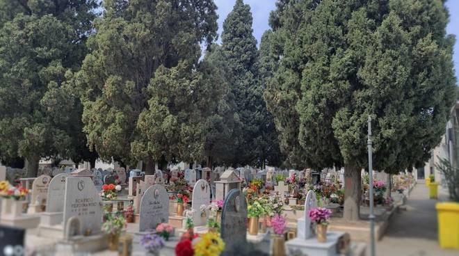 Pompei. Potatura cedri del libano