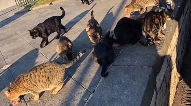 Gatti Porto di Sorrento - Foto tratta dal diario di Facebook di Enpa Delegazione Penisola Sorrentina