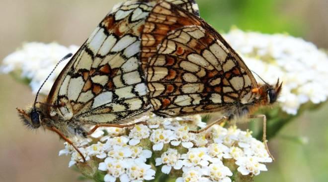 sentiero degli dei agerola farfalle