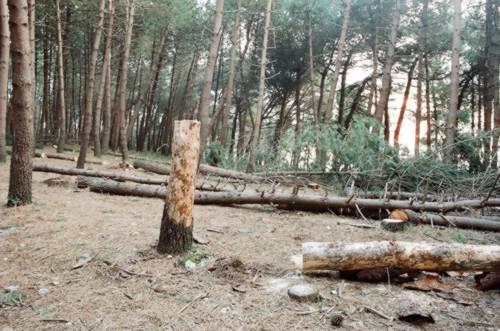Pineta Le Tore di Sorrento ... tra degrado e abbandono e a rischio incendi!