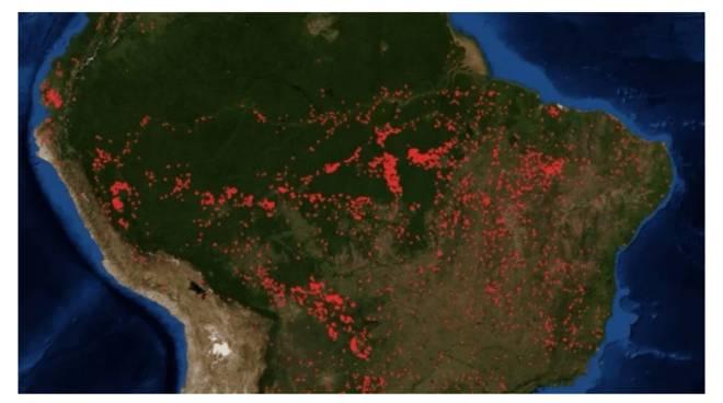 Amazzonia, DiCaprio, 5 milioni di dollari per la foresta pluviale