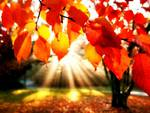 autunno in anticipo
