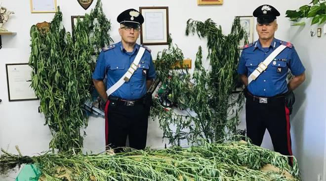 carabinieri-della-stazione-di-tramonti-sequestrano-piantagione-di-marijuana-3257411