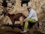 Antonio e le sue capre