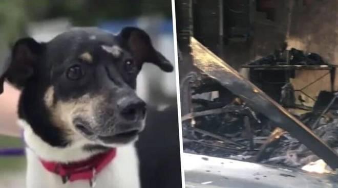 Florida: incendio in una casa a Bradenton, il jack russel salva tutta la famiglia, ma muore tra le fiamme