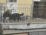 Sant'Agnello cani e gatti sulla terrazza della signora