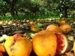 Arance e limoni fatti marcire