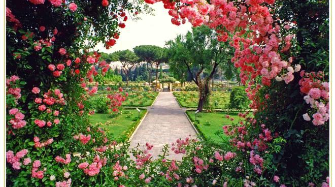 Roma città delle rose