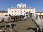 A San Tammaro, sabato 19 ottobre al via la IV edizione della manifestazione Cavalli e Cavalieri.