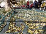 Costiera Amalfitana. Minori per il sociale: scout e anziani insieme per la raccolta delle olive