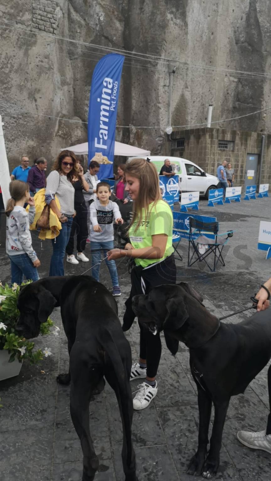 Meta, spettacolare raduno degli Alani da tutta Italia