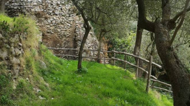 olivicoltura arola