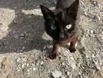 17 novembre Giornata del Gatto nero