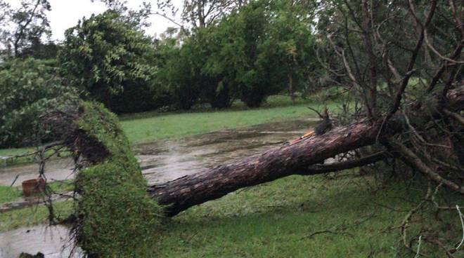Crollo albero