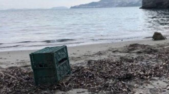 cane spiaggiato ischia michele schiano