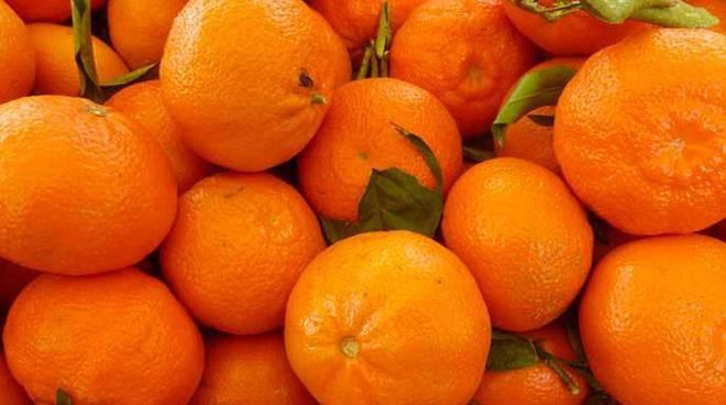 Festa del mandarino dei Campi Flegrei a Monte di Procida