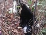 gatti avvelenati positano