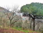 Alla scoperta degli alberi monumentali della penisola sorrentina, la Roverella di Anastasio