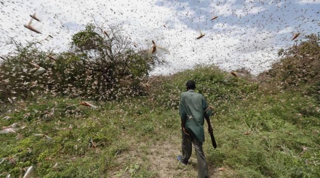 L\'ottava piaga (Locusts: The 8th Plague)