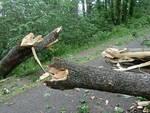crollo albero strada
