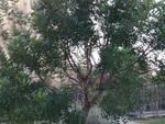Italia, il ministro chiede alle banche di piantare alberi