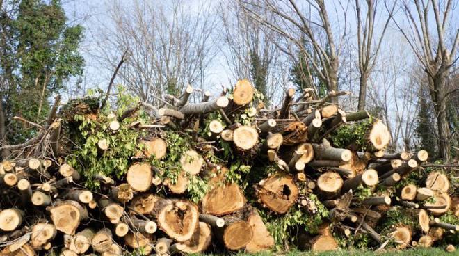 Milano, taglo di alberi al tempo del coronavirus, rimaniamo senza parole.