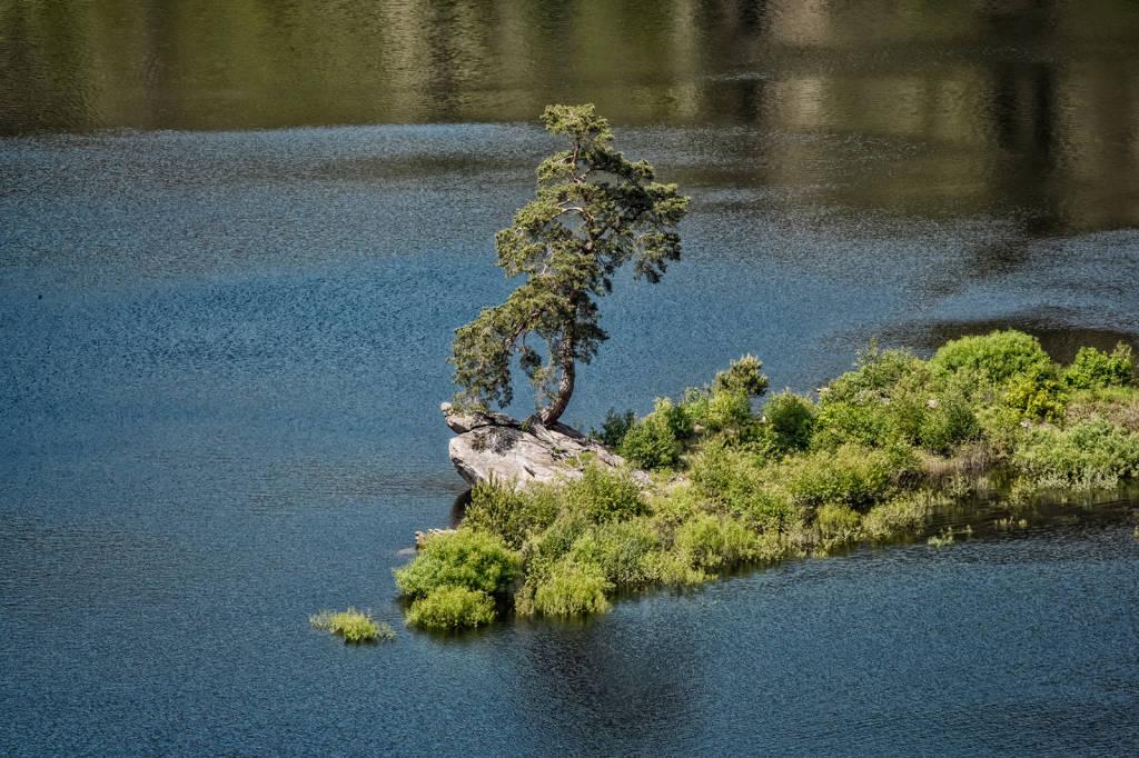 L\'albero dell\'anno 2020 è il Pino del villaggio allagato