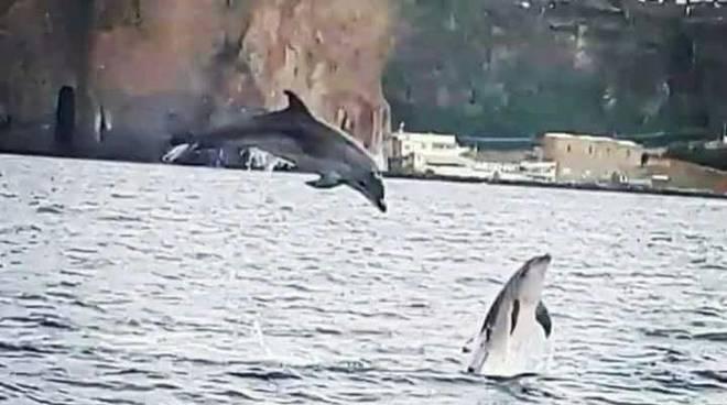 delfini sorrento