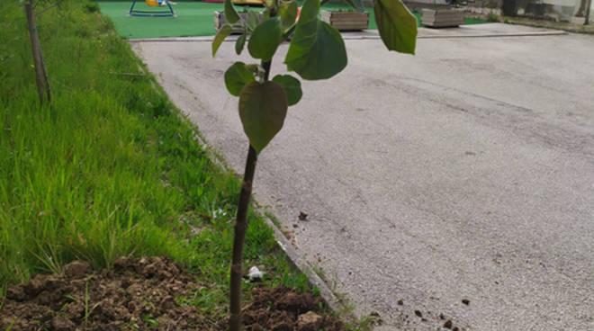 Guardia Sanframondi (Bn): Il Circolo Viticoltori in collaborazione con il Comune e la Scuola dell'Infanzia pianta alberi, in sicurezza!