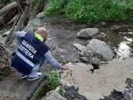 Pellezzano: operazione di tutela ambientale presso il fiume Irno