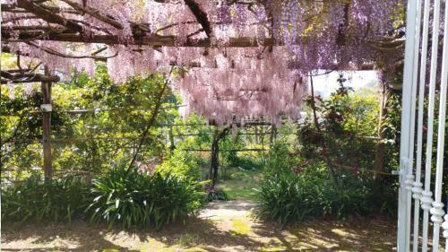 Tramonti. Il Giardino Segreto dell'Anima